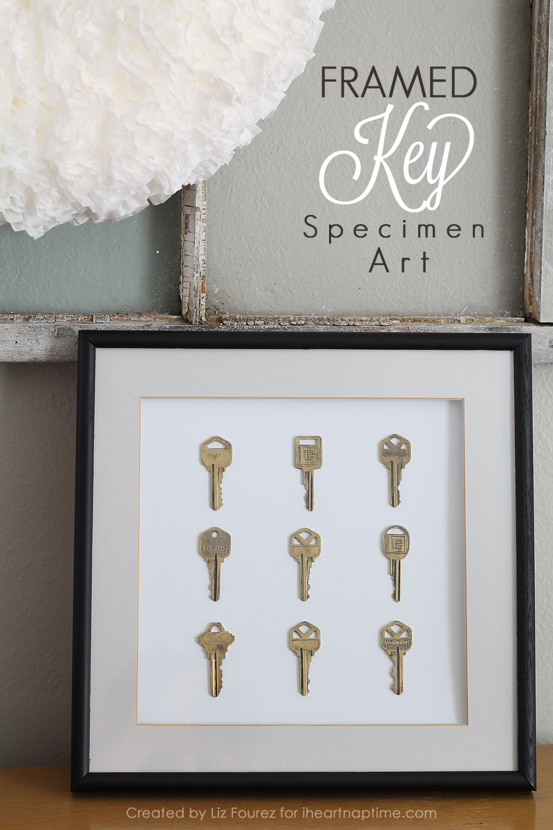 Framed Key Specimen Art | LoveGrowsWild.com