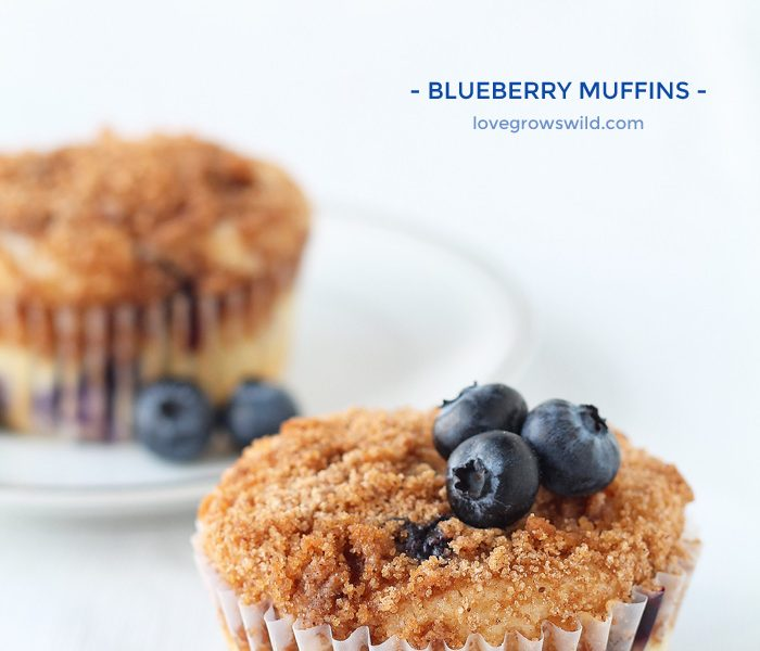 The BEST Blueberry Muffin recipe! These muffins are light, fluffy, and bursting with berry flavor! | LoveGrowsWild.com