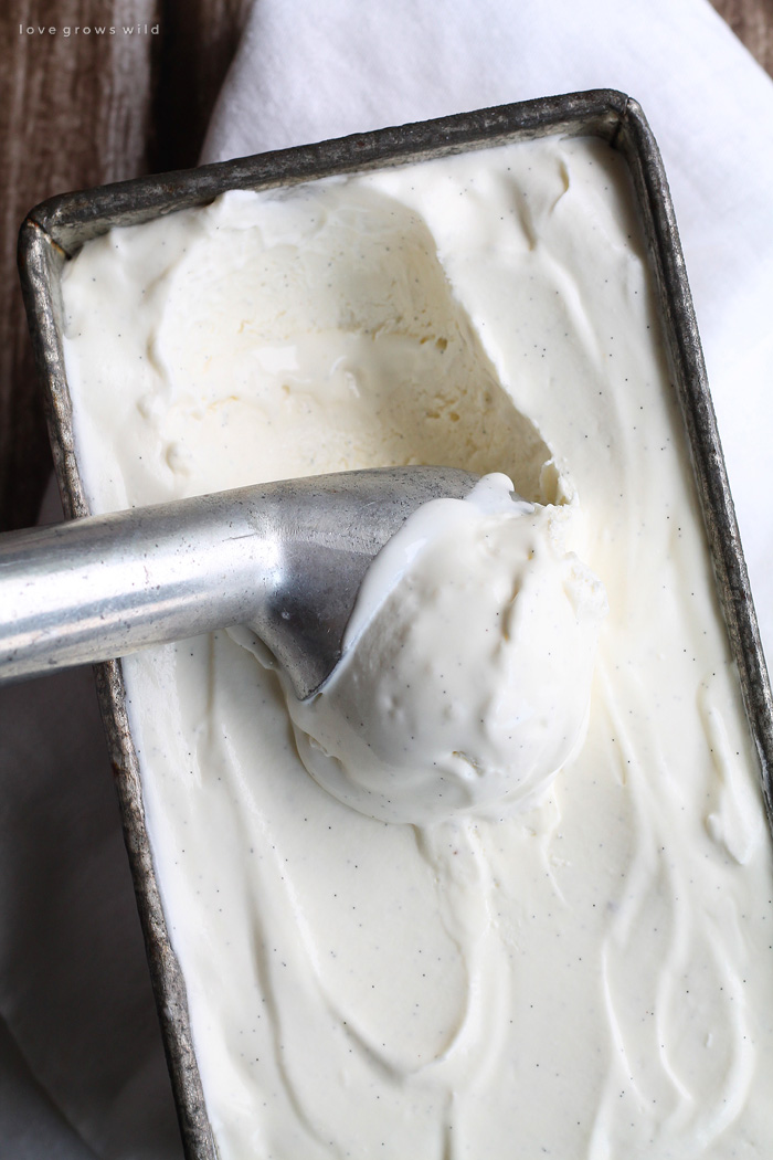 No Churn Vanilla Ice Cream Love Grows Wild