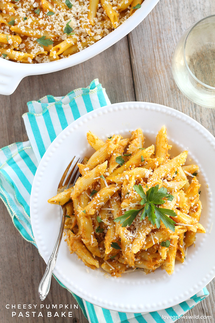 Pumpkin isn't just for dessert anymore! This Cheesy Pumpkin Pasta Bake is super creamy and SO delicious!   LoveGrowsWild.com