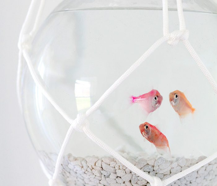 Hang a fish bowl from the ceiling with this awesome macrame hanger! Give your fish a stylish home and save table space! Step-by-step details at LoveGrowsWild.com