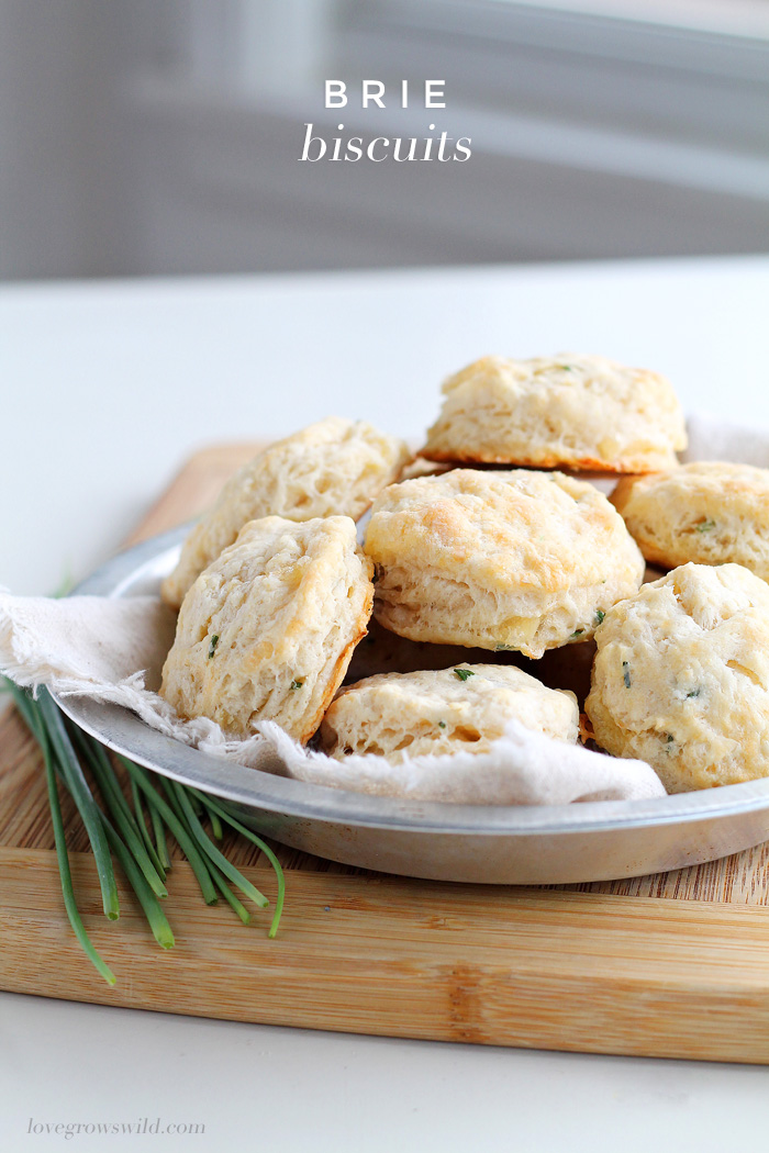 Tender, fluffy biscuits made from scratch with chunks of Brie cheese and chives! The perfect addition to any meal!   LoveGrowsWild.com