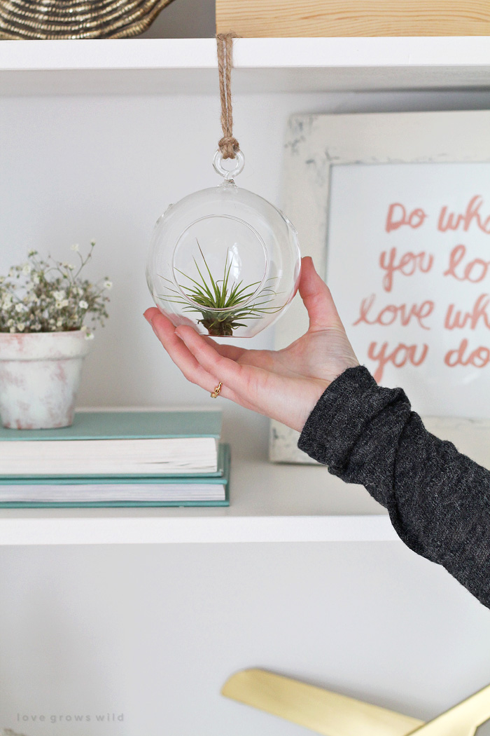 See how 3 bloggers decorated their homes with air plants! | LoveGrowsWild.com
