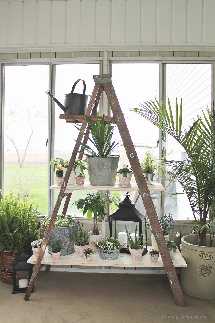 Antique Ladder Shelving Love Grows Wild