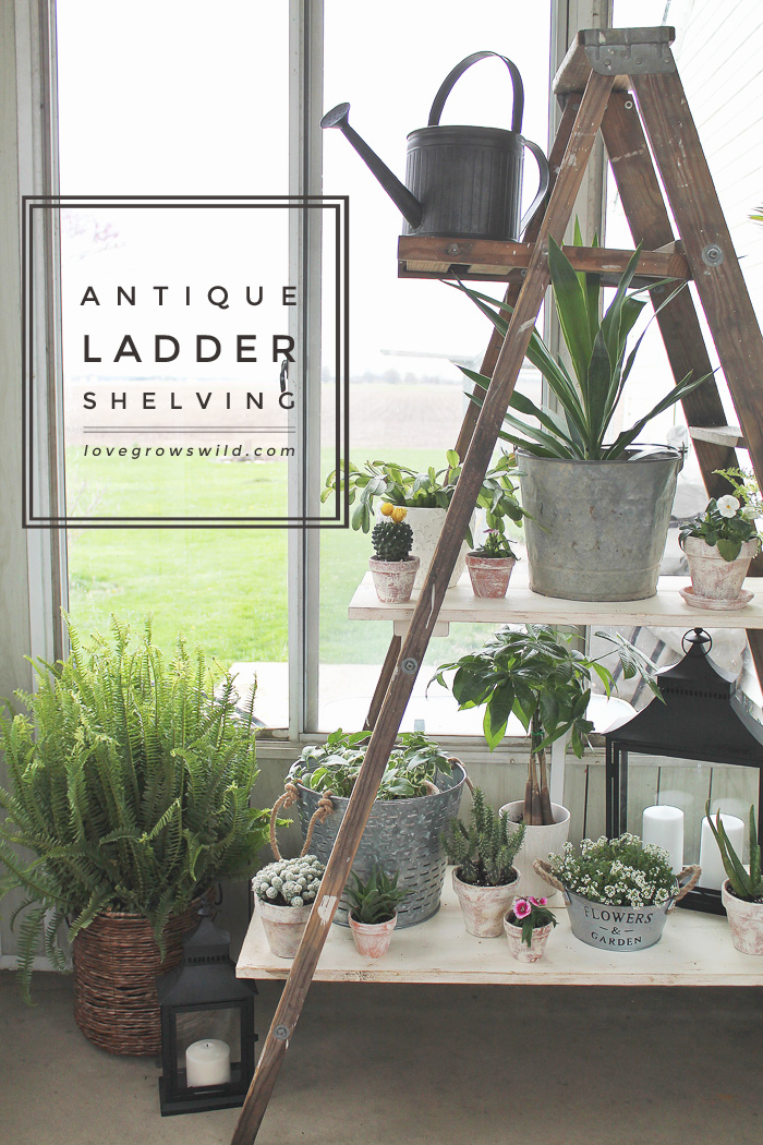 Create shelving out of an old antique ladder with this easy tutorial! Click for details at LoveGrowsWild.com
