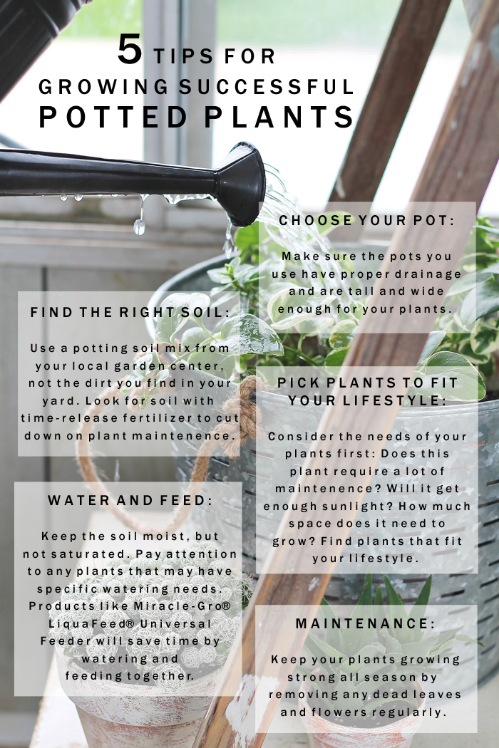 Remember these 5 easy tips for growing successful potted plants! More details at LoveGrowsWild.com