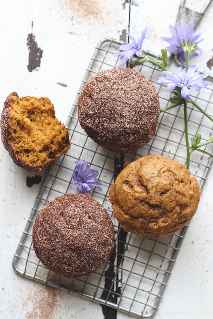 Warm, fluffy pumpkin muffins with a crunchy cinnamon sugar coating... the perfect fall breakfast, snack, or treat! | LoveGrowsWild.com