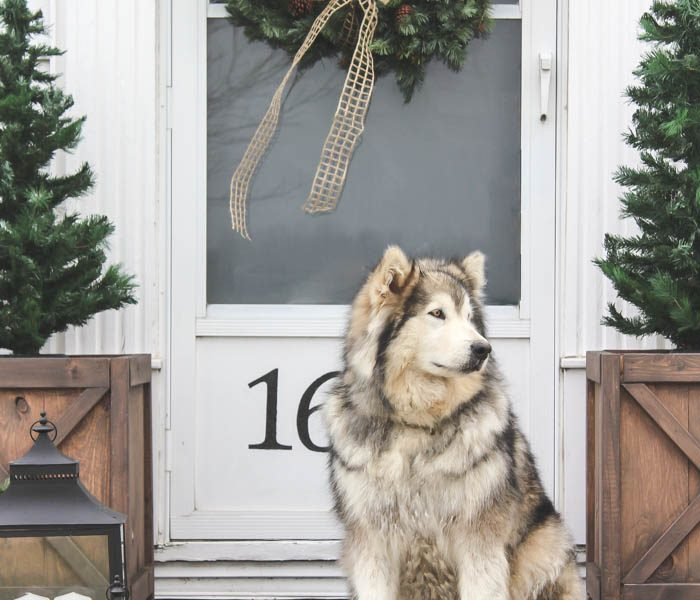 Take a tour of this Indiana farmhouse all dressed up for the holidays! See more photos at LoveGrowsWild.com