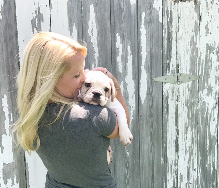 A four month old French bulldog comes home to the farmhouse