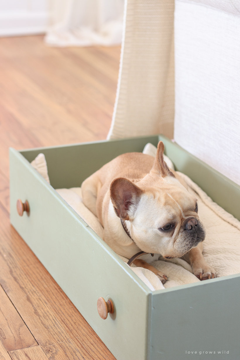 This simple and quick DIY project turns a dresser drawer into a cute, cozy dog bed that coordinates with your home!