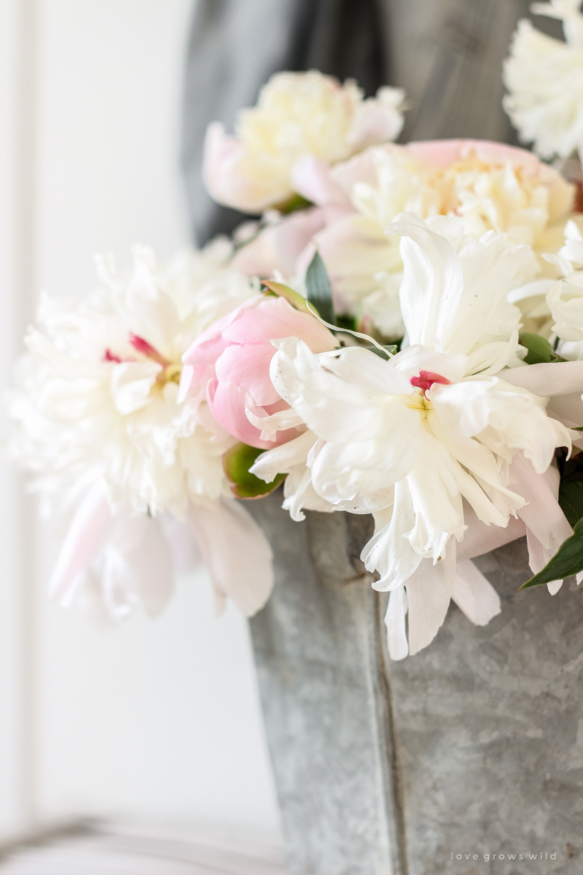 Peonies in a bucket