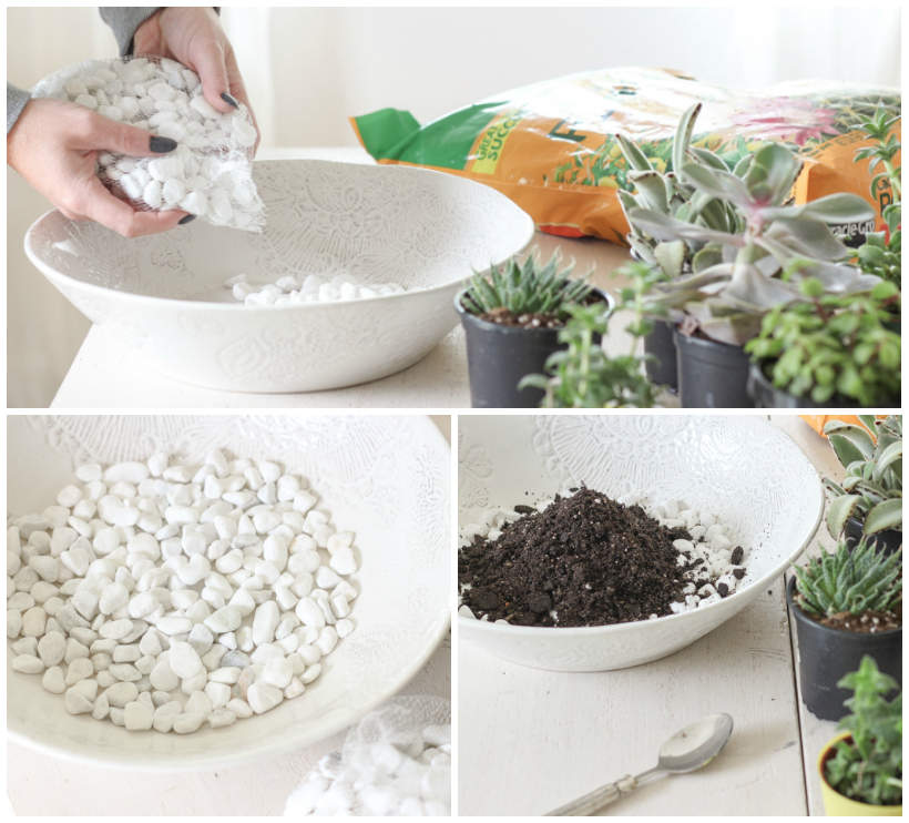 Learn how to create a stunning succulent bowl centerpiece with this easy tutorial