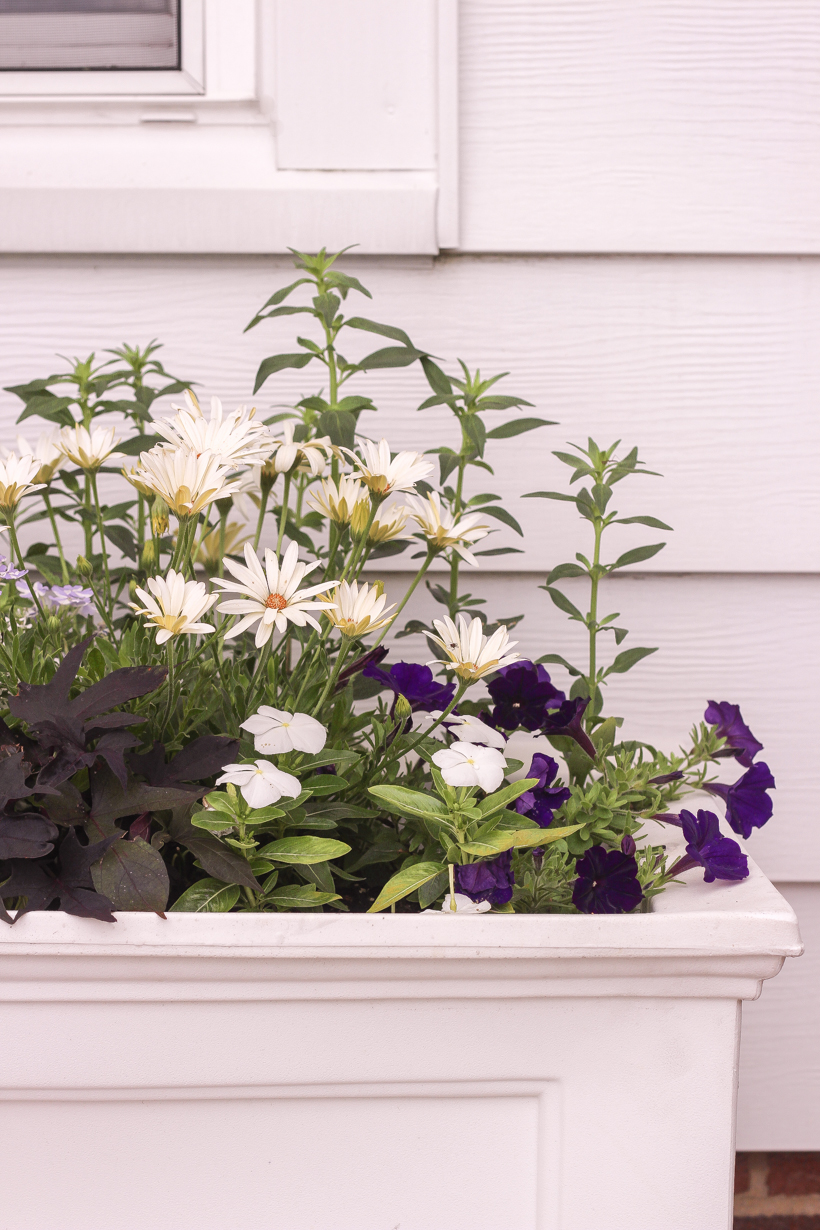 Home blogger and interior decorator Liz Fourez shares her favorite plants and flowers that she planted this year